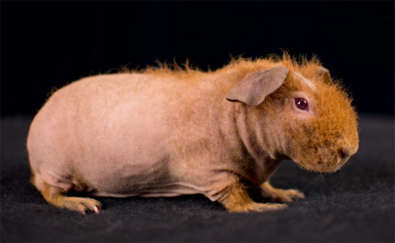 skinny pige hot Copenhagen